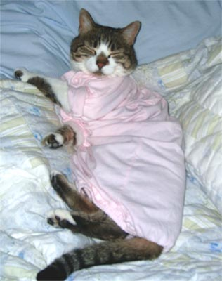Cat in clothing