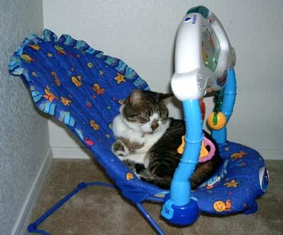 Cat in bouncer